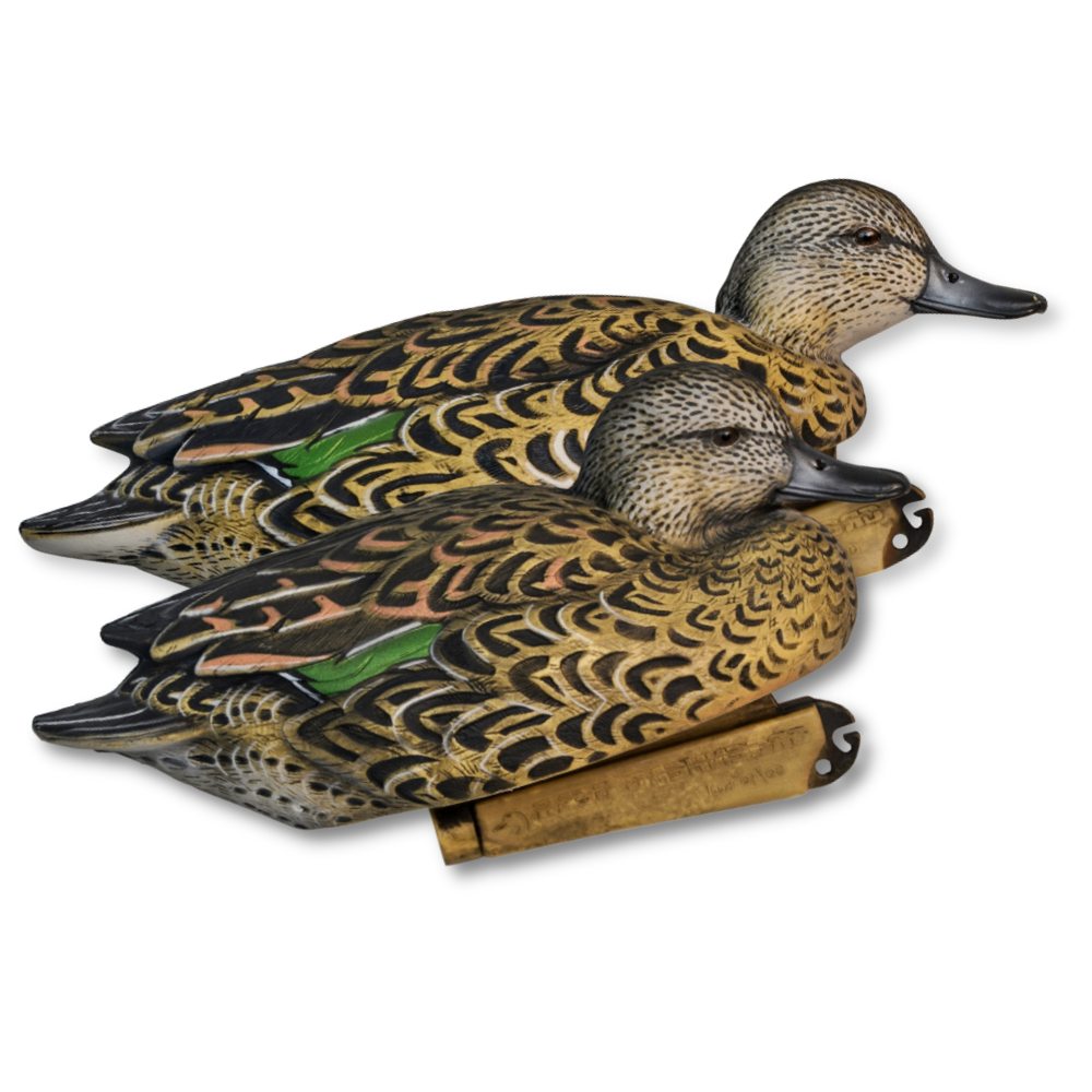 Image of GHG Green-Winged Teal