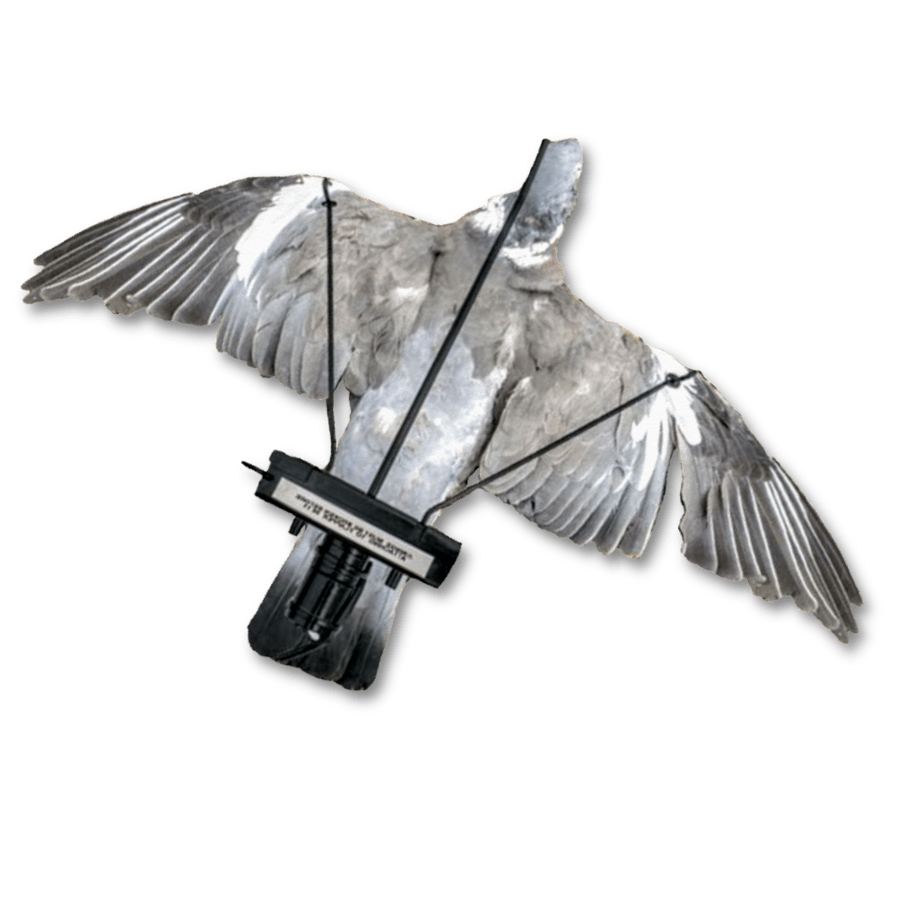 Image of a dead pigeon mounted onto the pigeon turbo flapper.