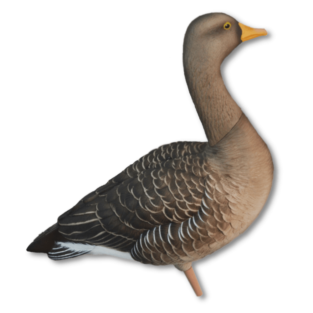 Image of Avian-X Full Body Greylags - Fusion Pack