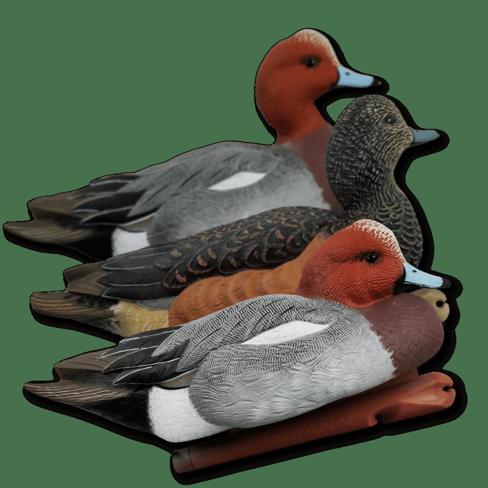 Image of Avian-X Widgeon (European) Duck Decoys