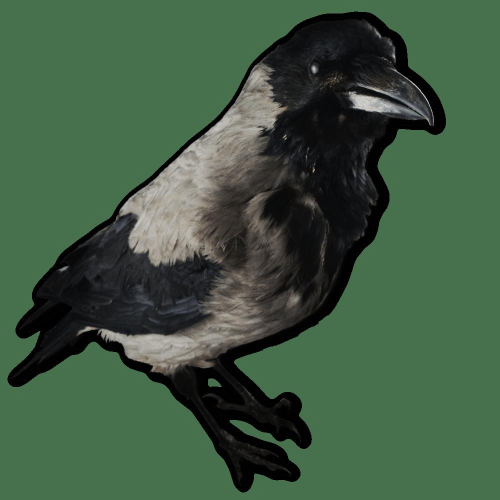 Image of a crow decoy
